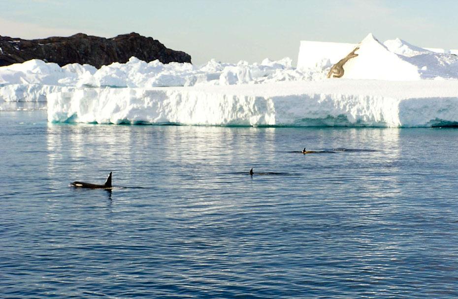 antarktida-zveri-3