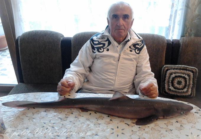 Рыбак и акула