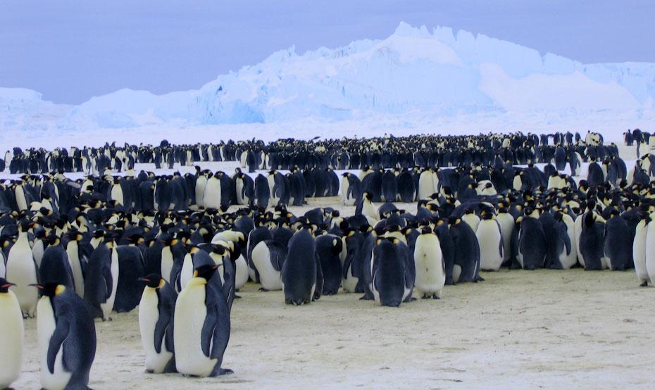 pingvini-14