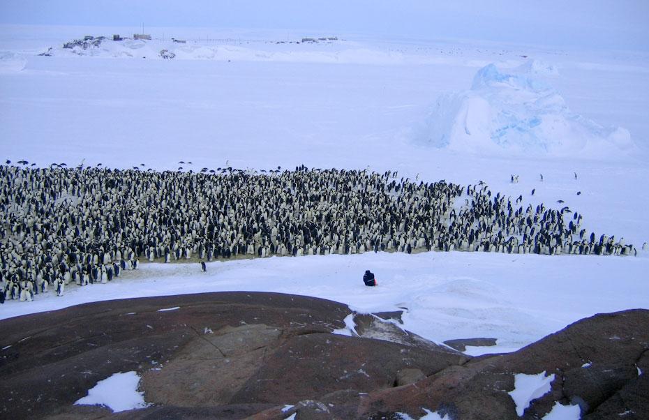 pingvini-15