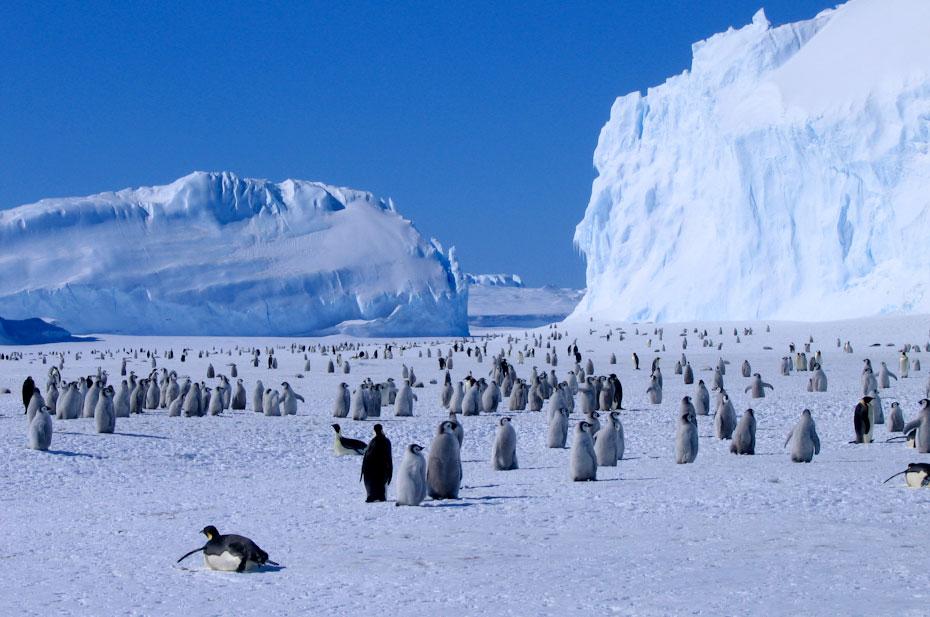 pingvini-17