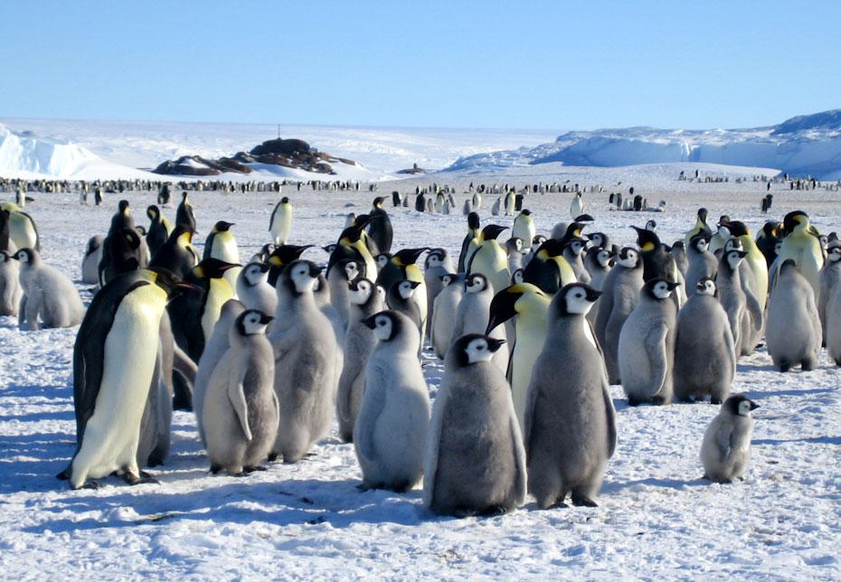 pingvini-19