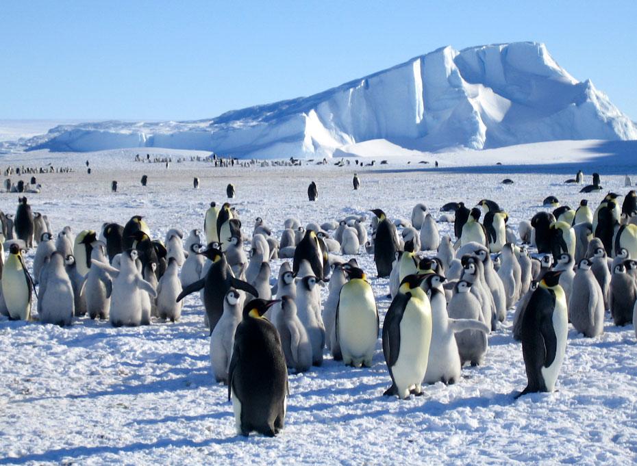pingvini-22
