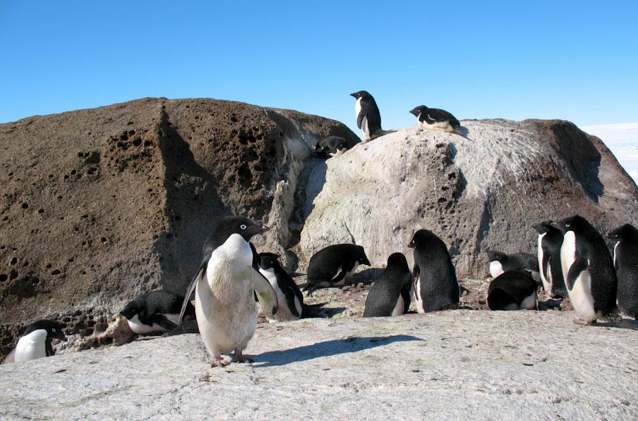 pingvini-23