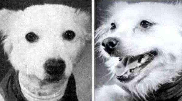 Собаки Жулька и Альфа